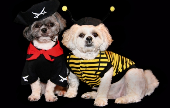 Barrington Dressed up Dogs