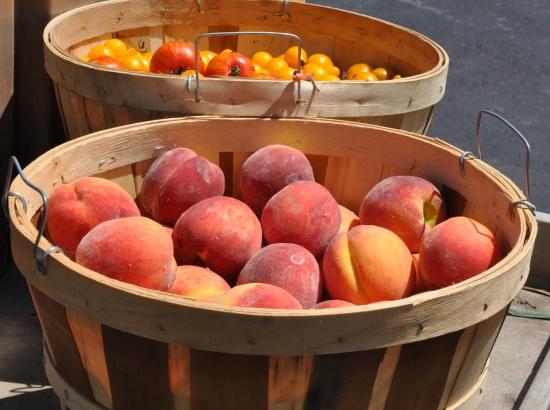 Picking Peaches at The Foley Farm