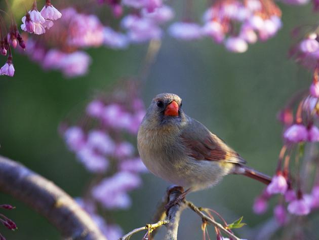 Post - Spring Birds