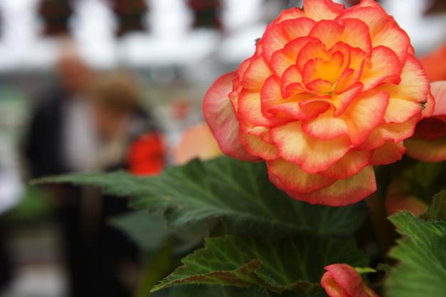 Goebbert's Flowers - Photographed by Julie Linnekin