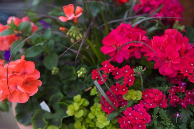 Flowers in Bloom at Goebbert's - Photographed by Julie Linnekin