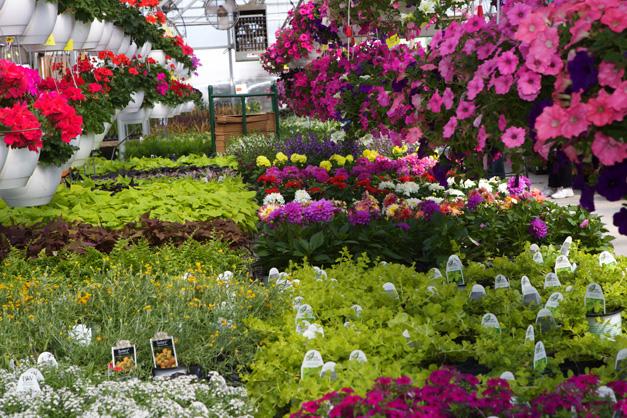 Goebbert's Greenhouse Flowers - Photographed by Julie Linnekin