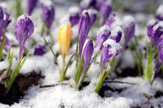 Spring Arrives on March 20, 2014