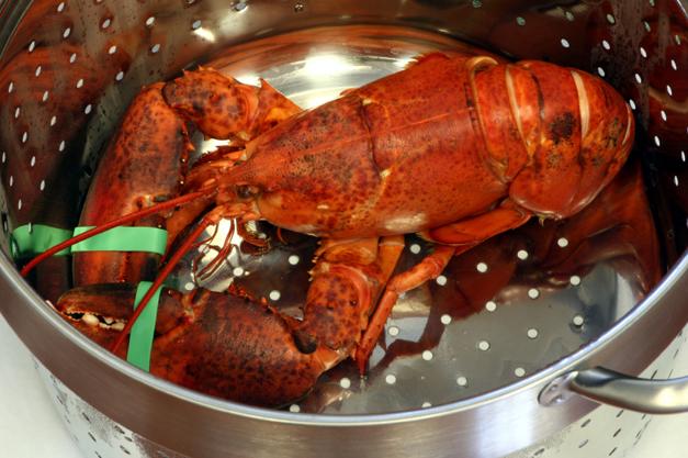 Heinen's will have live Maine lobster on Valentine's Day