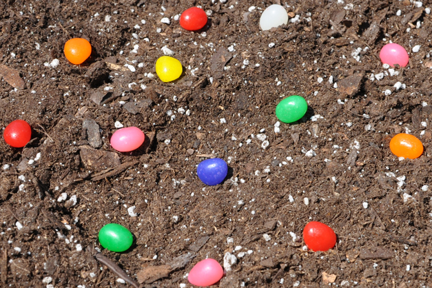 Let Your Kids Plant the Magic Jelly Beans