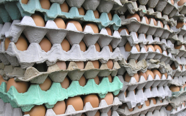 Get Growing with Jessica Green - All About Eggs