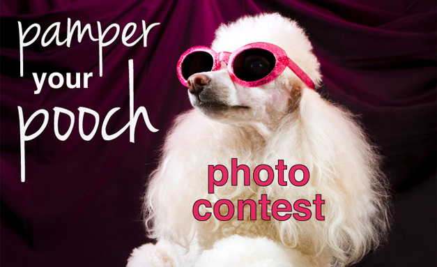 Post - Pampered Pooch Photo Contest - 2 - FACEBOOK