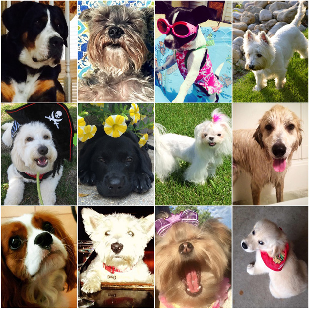 Post - Collage - Pamper Your Pooch