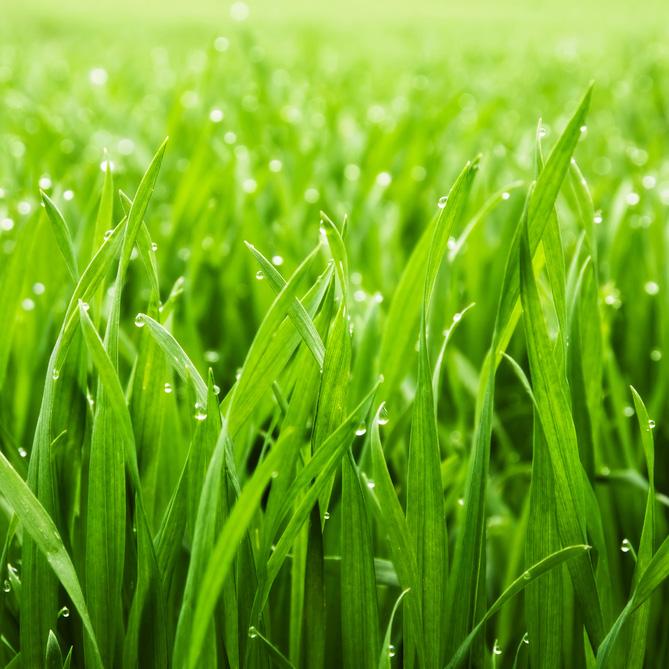Post - Fresh Grass - Square